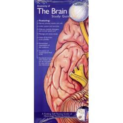 Anatomical Chart Company's Illustrated Pocket Anatomy: Anatomy of The Brain Study Guide