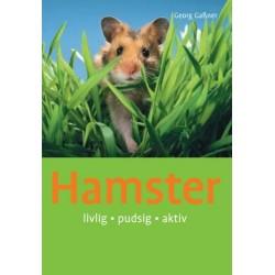 Hamster: sød, sjov, aktiv