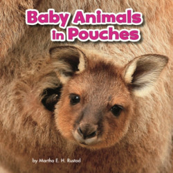 Baby Animals in Pouches