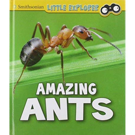 Insect Explorer Pack A of 6