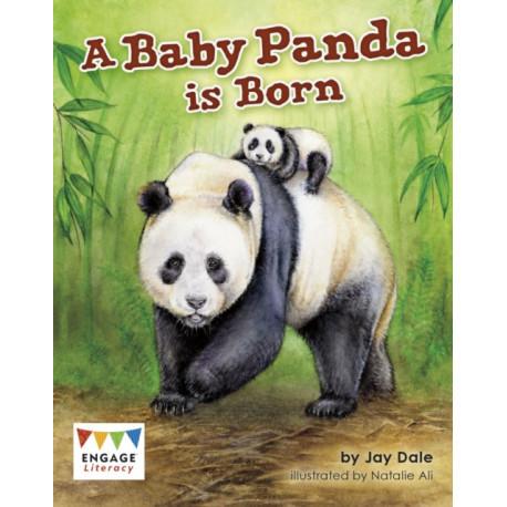 A Baby Panda is Born
