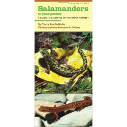 Salamanders in Your Pocket: A Guide to Caudates of the Upper Midwest