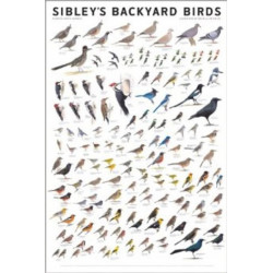 Sibley's Backyard Birds: Western North America