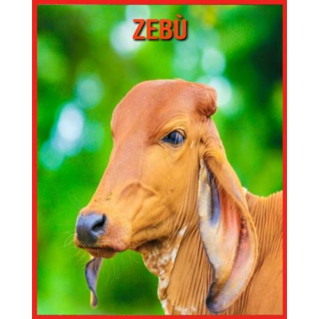 Zebu: Immagini incredibili e fatti divertenti sui Zebu