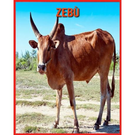 Zebu: Fatti sorprendenti sui Zebu