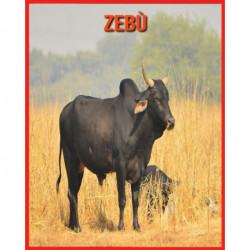 Zebu: Libro per bambini con fatti divertenti e foto incredibili