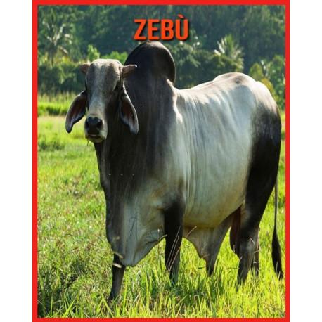 Zebu: Immagini stupende e fatti divertenti sugli animali della natura