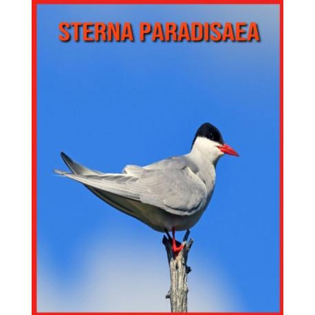 Sterna Paradisaea: Scopri i Sterna Paradisaea e goditi le immagini colorate