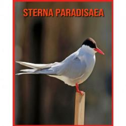 Sterna Paradisaea: Immagini stupende e fatti divertenti sugli animali della natura