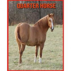 Quarter Horse: Immagini stupende e fatti divertenti sugli animali della natura