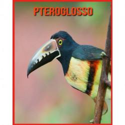 Pteroglosso: Immagini stupende e fatti divertenti sugli animali della natura