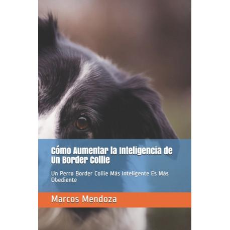 Como Aumentar la Inteligencia de Un Border Collie: Un Perro Border Collie Mas Inteligente Es Mas Obediente