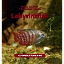 Labyrintfisk