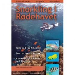 Snorkling i Rødehavet: Sharm el Sheikh, Hurghada, Marsa Alam