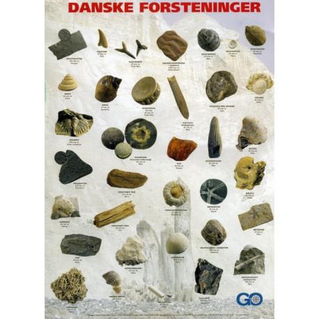 Danske Forsteninger: Plakat, A4 format