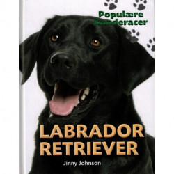 POPULÆRE HUNDERACER: Labrador retriever