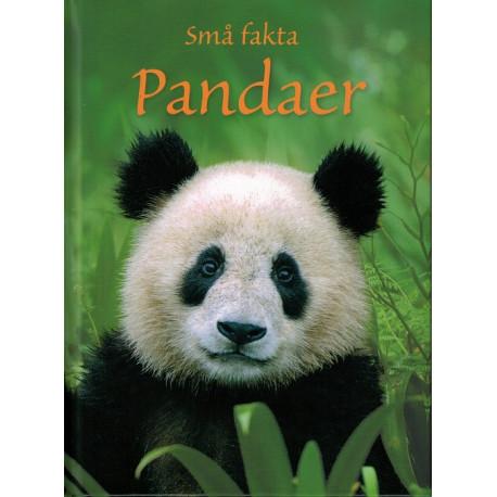 Små fakta: Pandaer