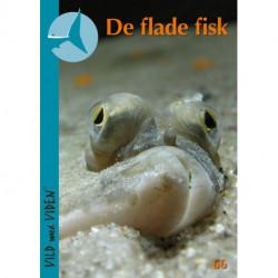 De flade fisk: Vild med Viden Nr. 66