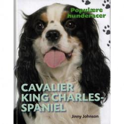 POPULÆRE HUNDERACER: Cavalier King Charles Spaniel