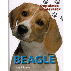 POPULÆRE HUNDERACERE: Beagle