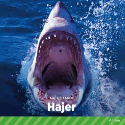 Hajer