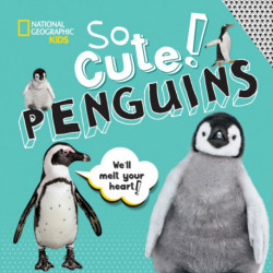 So Cute: Penguins