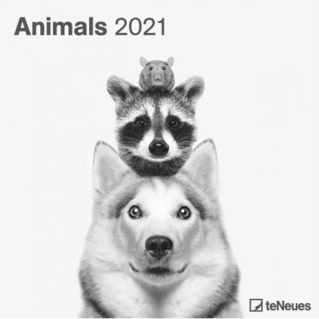 ANIMALS 30 X 30 GRID CALENDAR 2021